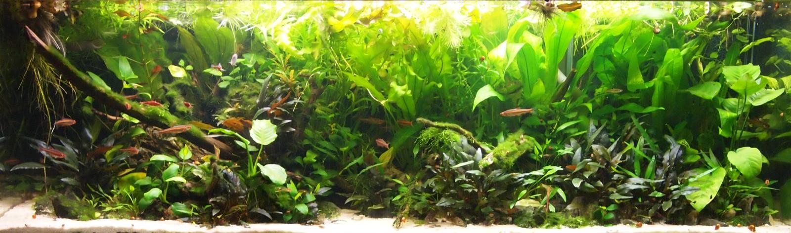 240 liter nature neueinrichtung seite 5 aquarium forum for Elritzen im gartenteich