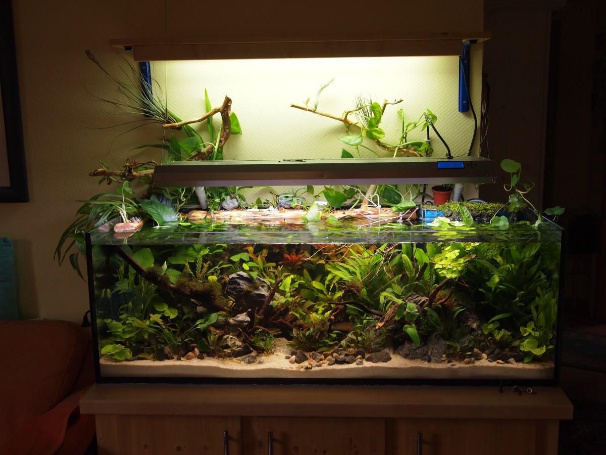 aufbaudoku 240l kaltwasserbecken seite 2 bis 300l aquaristik sh das forum aus schleswig. Black Bedroom Furniture Sets. Home Design Ideas