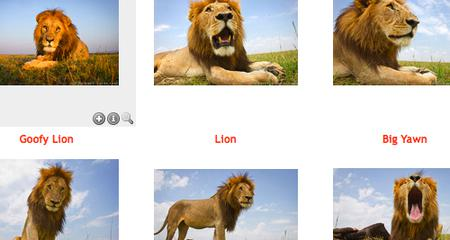 Bild: screencap lions